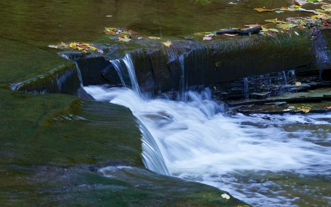 Guided Doan Brook Hikes