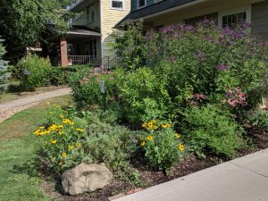Bringing Nature Home: Designing a Native Garden