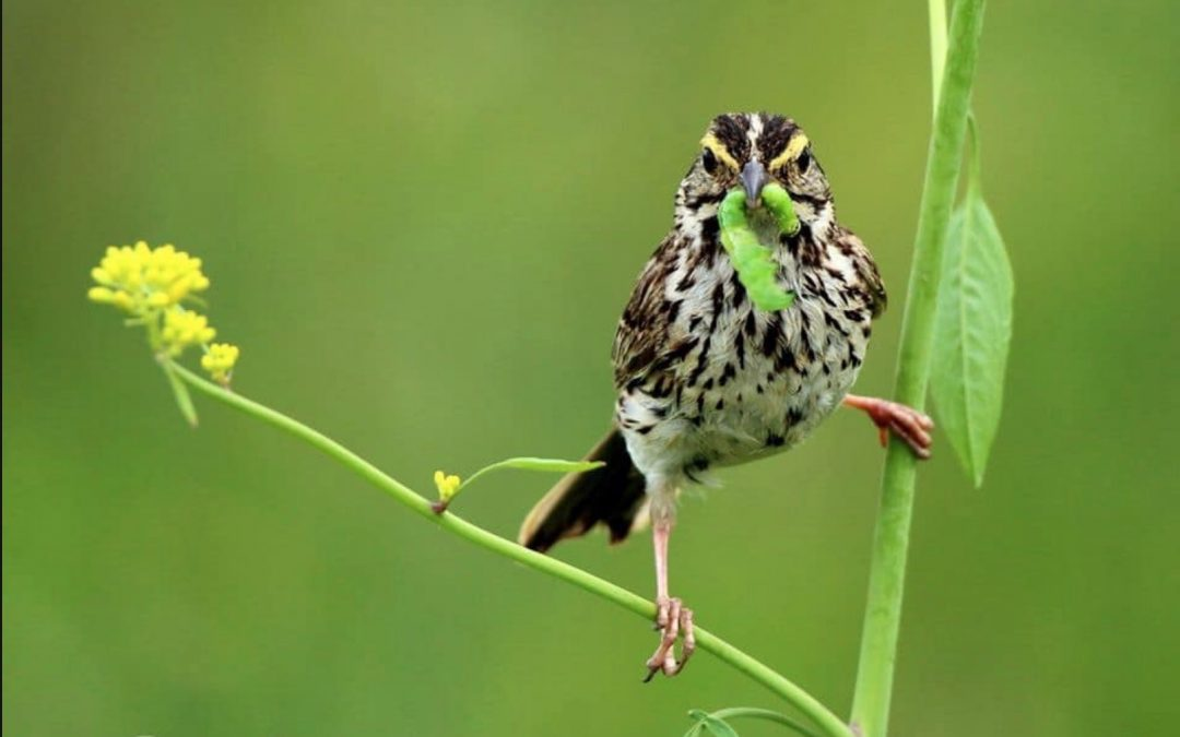 A New Primer on Backyard Birding with John Barber