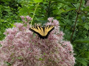 Bringing Nature Home: Right Plant, Right Place