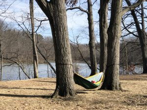 Person in a hammock between two trees near Lower Lake.