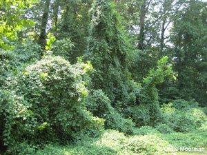 Conquer Invasive Plants with John Barber