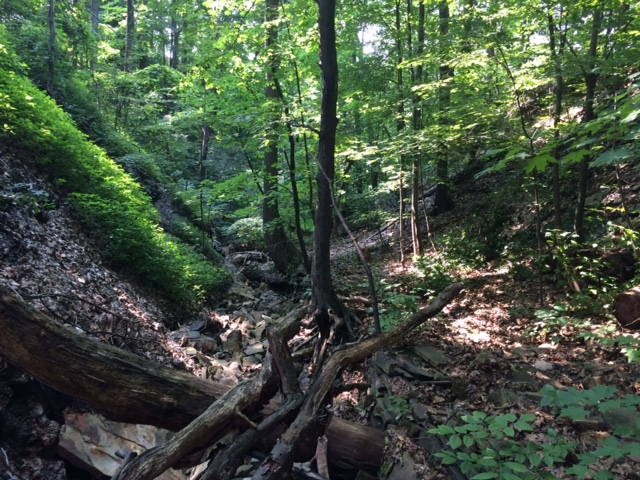 Ambler Heights Walk with Dr. Roy Larick